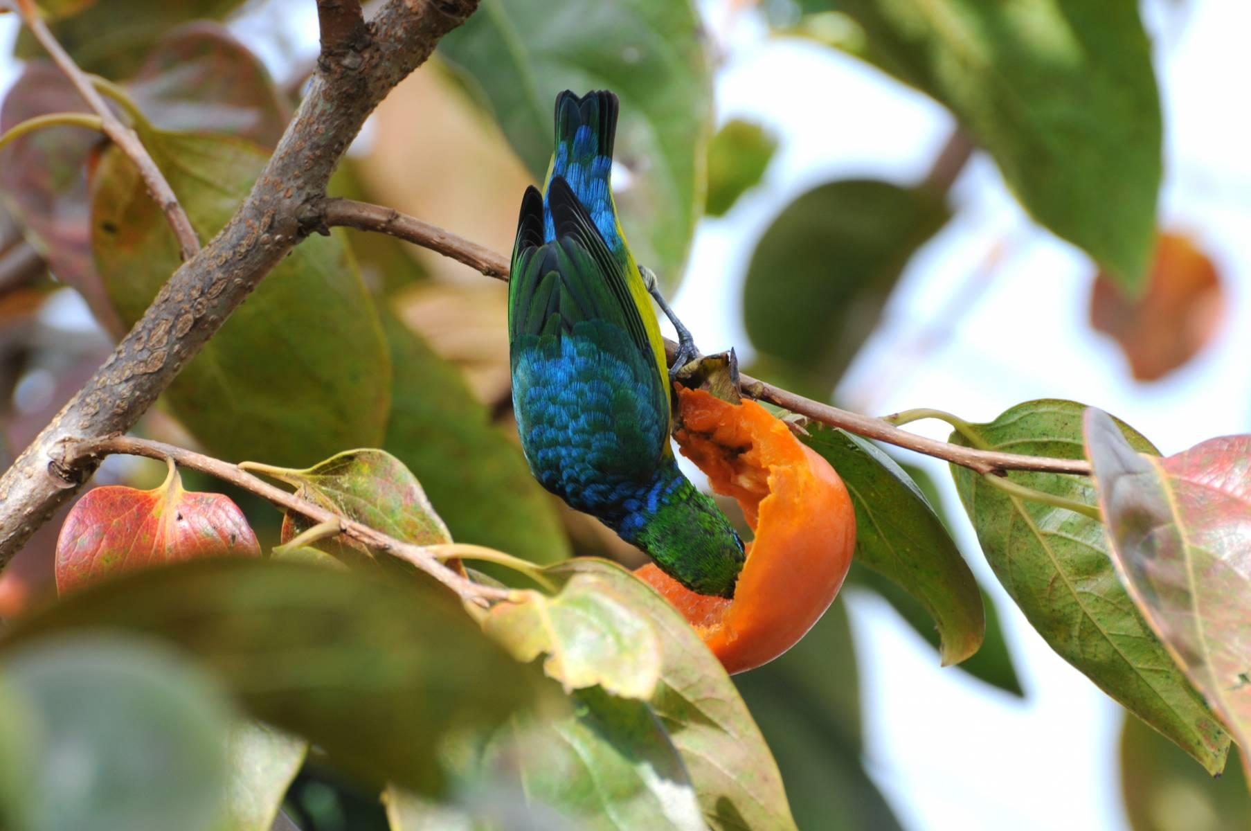 Bandeirinha - Plantas e Pássaros - Hotel Bangalôs da Serra #CurtaSuaFamilia #HotelSustentavel #TurismoVerde #TravelersChoice #EcoLider #Gramado