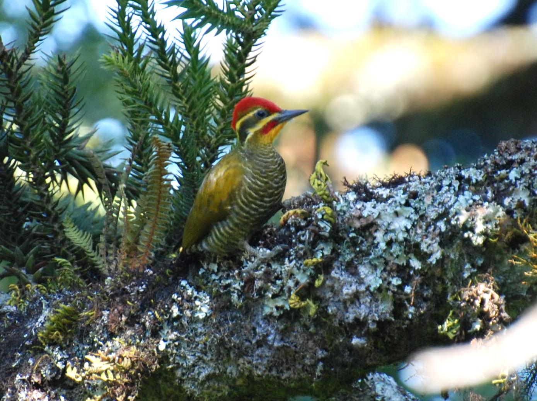 Pica-pau-dourado: Plantas e Pássaros no Hotel Bangalôs da Serra #CurtaSuaFamilia #HotelSustentavel #TurismoVerde #TravelersChoice #EcoLider #Gramado