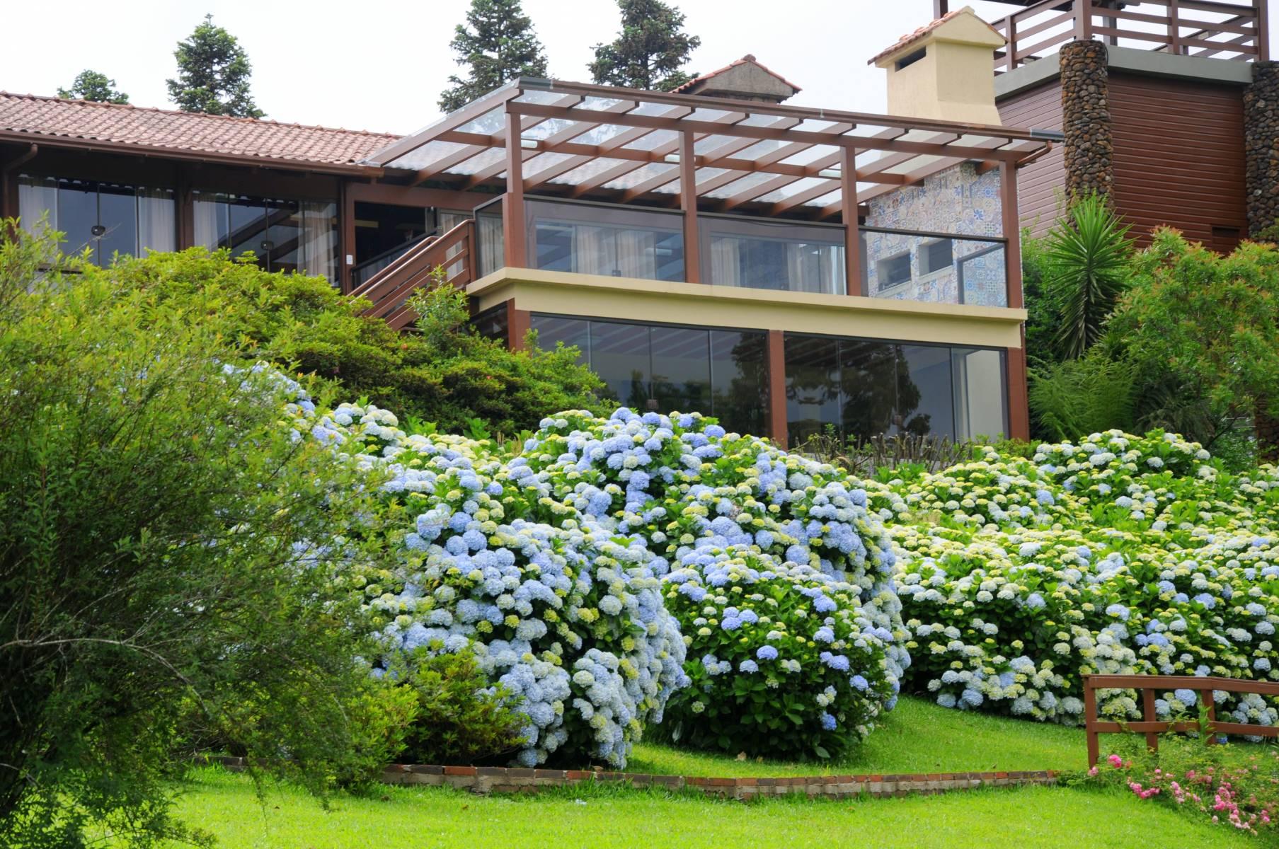 Sede com Hortênsias - Hotel Bangalôs da Serra #CurtaSuaFamilia #HotelSustentavel #TurismoVerde #TravelersChoice #EcoLider #Gramado
