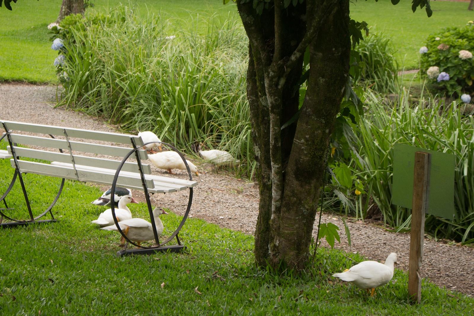 Casais - Rede - Jardim - Trilha Ecológica