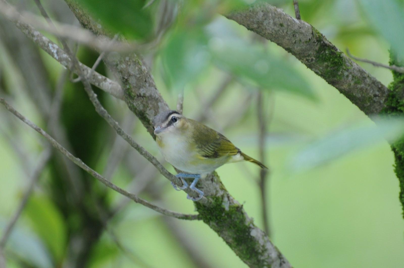 Animais - Pássaro - Sustentabilidade