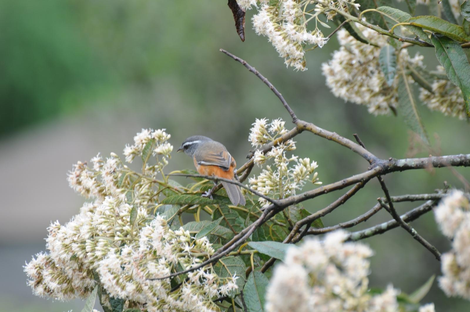 Animais - Pássaro - Limpa-folha - Sustentabilidade