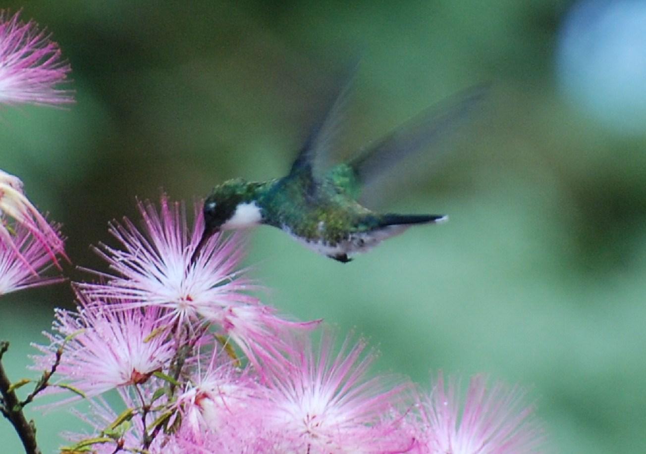 Animais - Pássaro - Beija Flor - Sustentabilidade