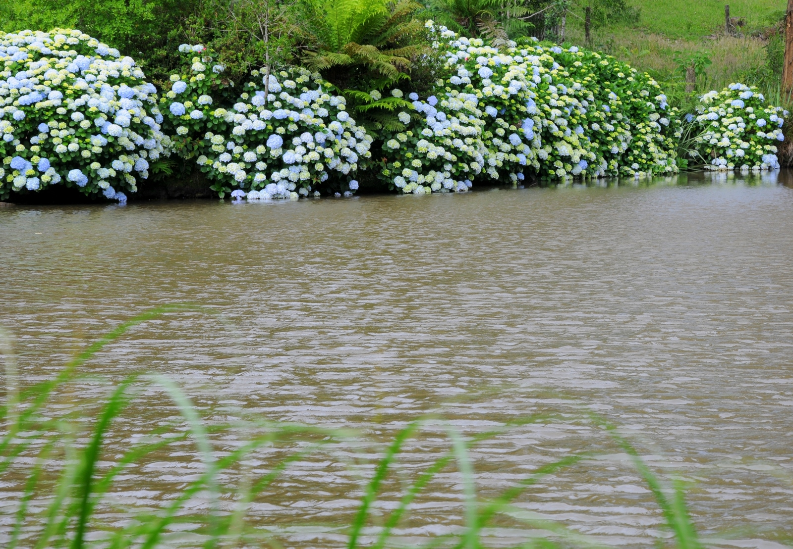 Lago - Hotel Bangalôs da Serra :: Gramado