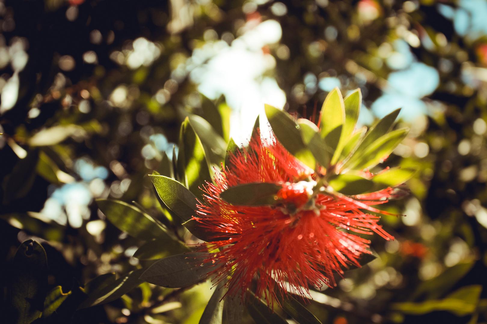 Flor no Hotel Bangalôs da Serra em Gramado - Serra Gaúcha - Natassia Truz Moraes