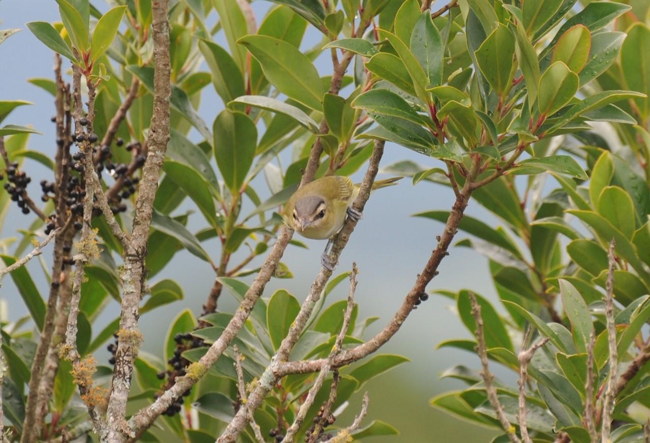 Você já ouviu falar de: birdwatching ou birding? Significa: observar aves em seu habitat natural, sem caçar ou interferir na rotina dos animais