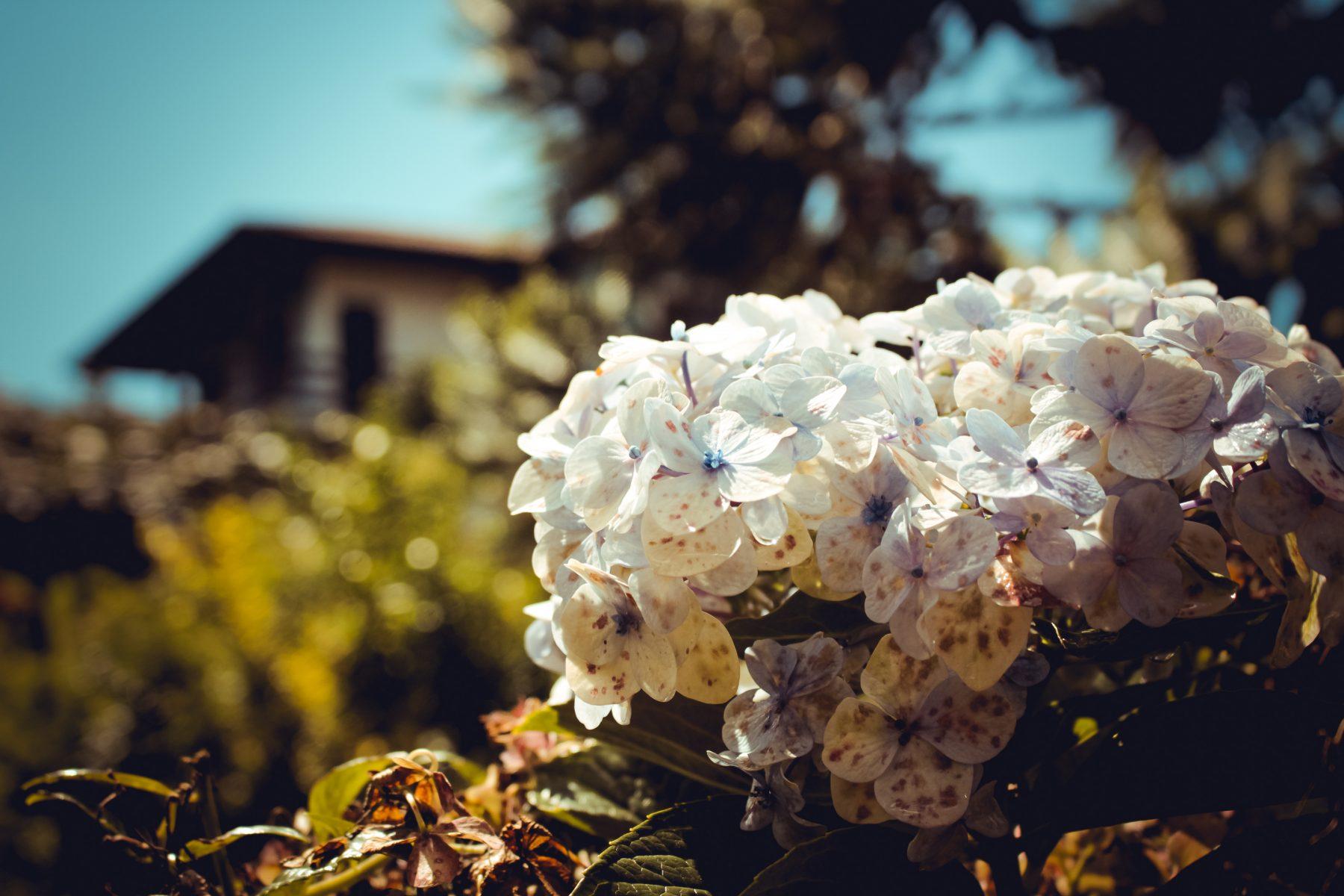 Flor no Hotel Bangalôs da Serra de Gramado - Foto: Natassia Truz Moraes