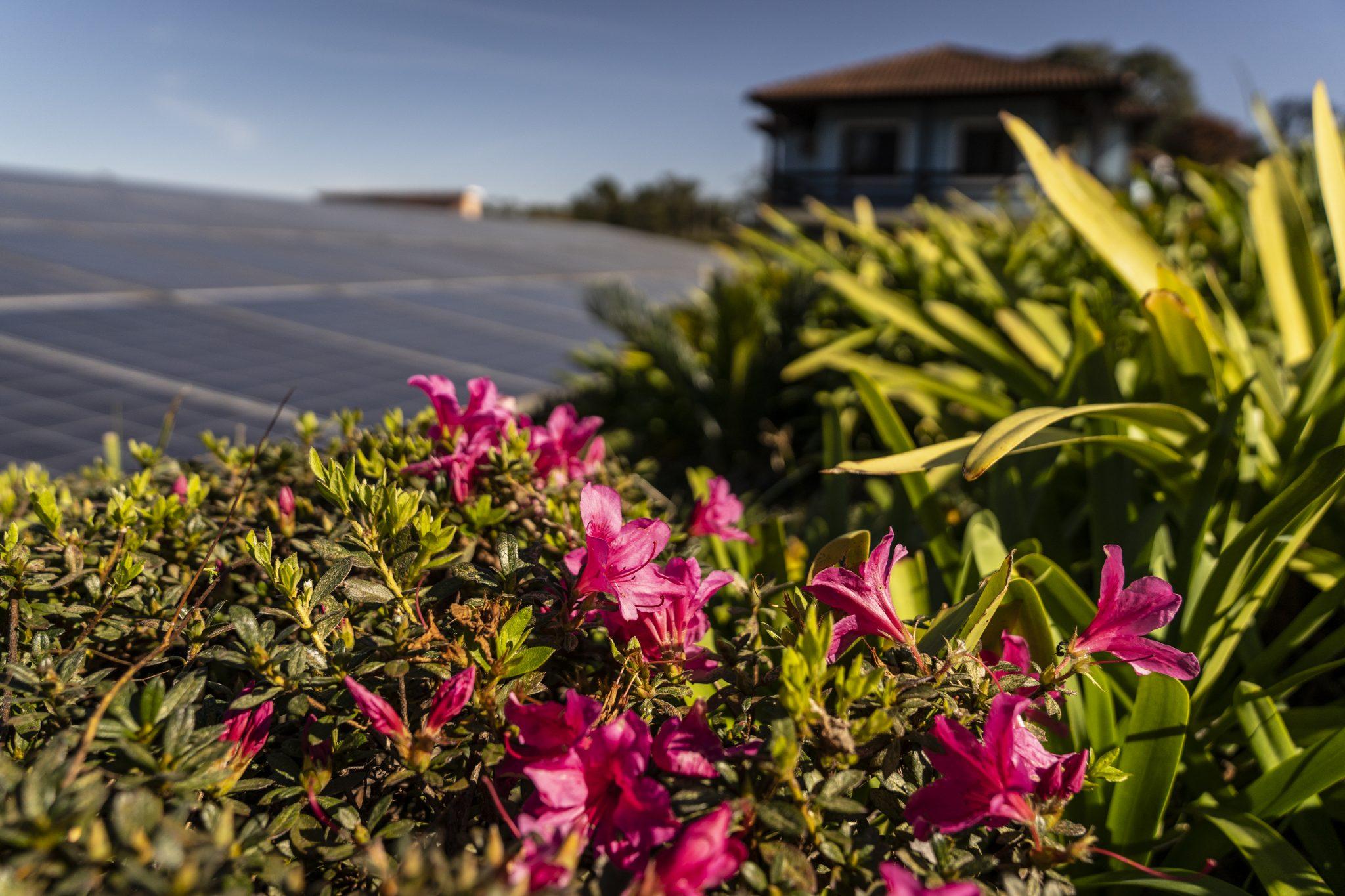 Flores e Painel Solar Hotel Fazenda em Gramado - Foto Marcelo Curia
